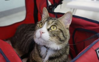 How to Get Your Cat Used to A Stroller